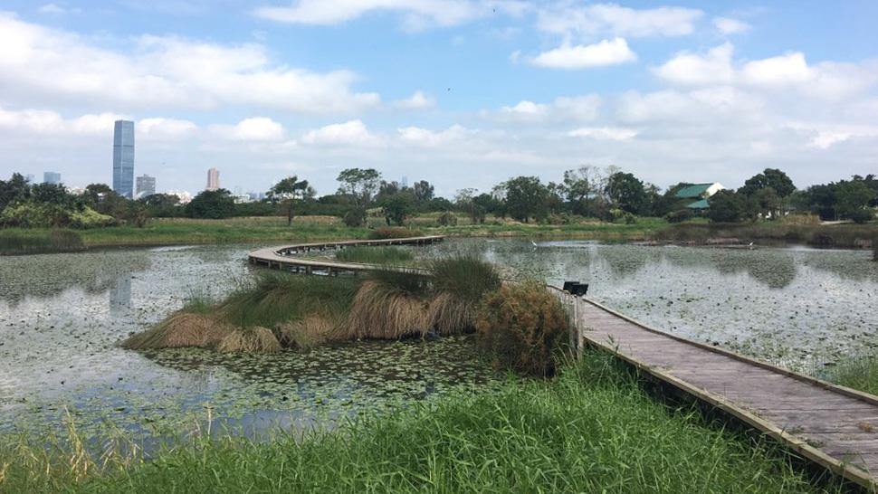 考察濕地及棲息在內的生物