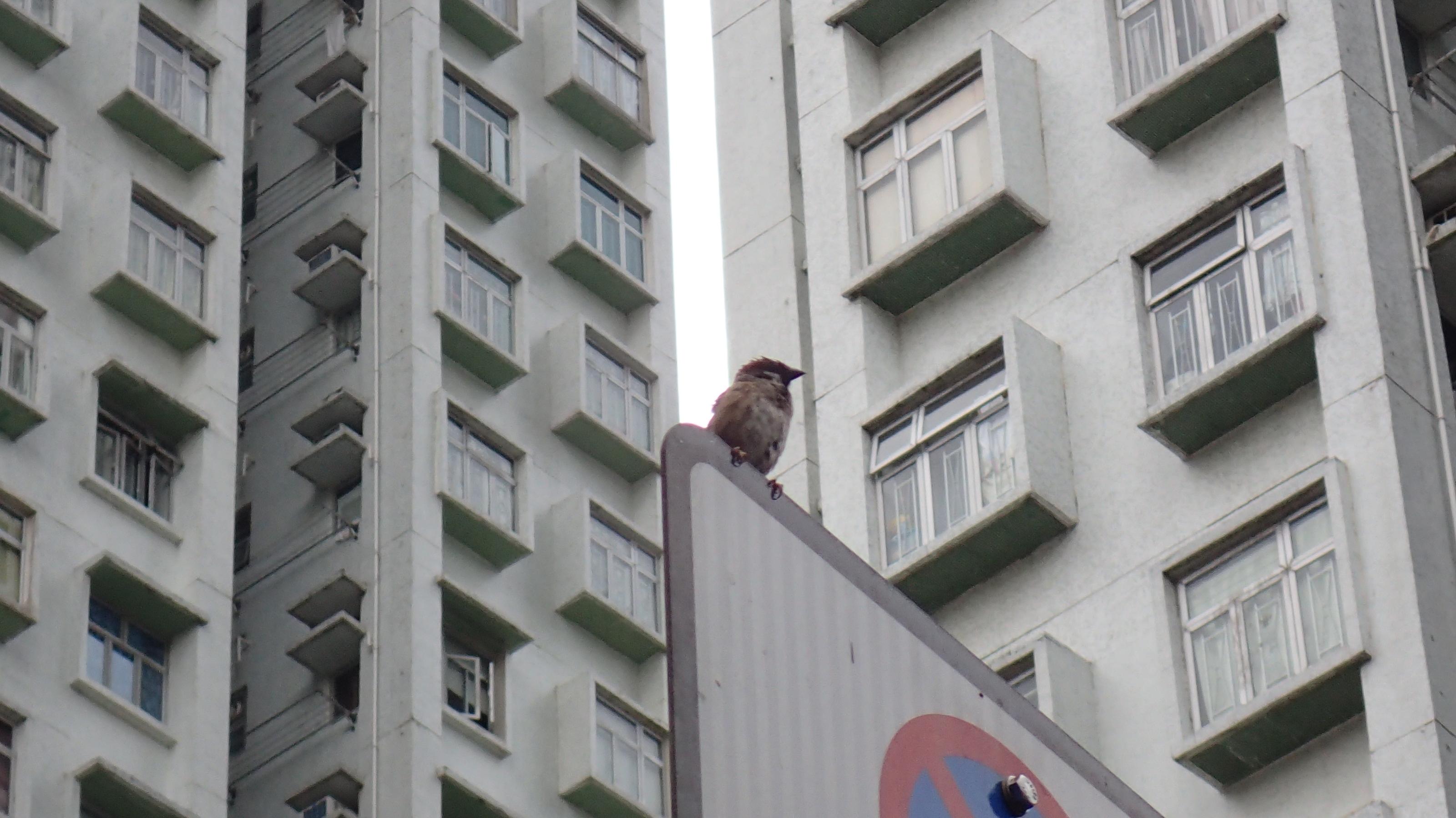 探索城市鳥類
