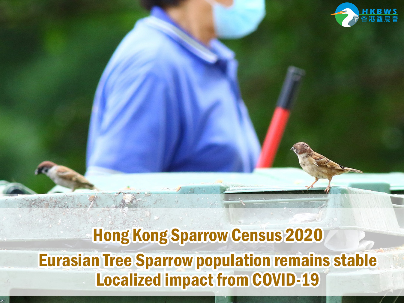Sparrow Census 2020 - Eurasian Tree Sparrow population remains stable Localized impact from COVID-19
