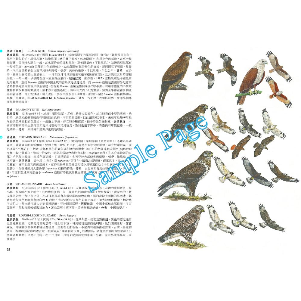 香港及華南鳥類