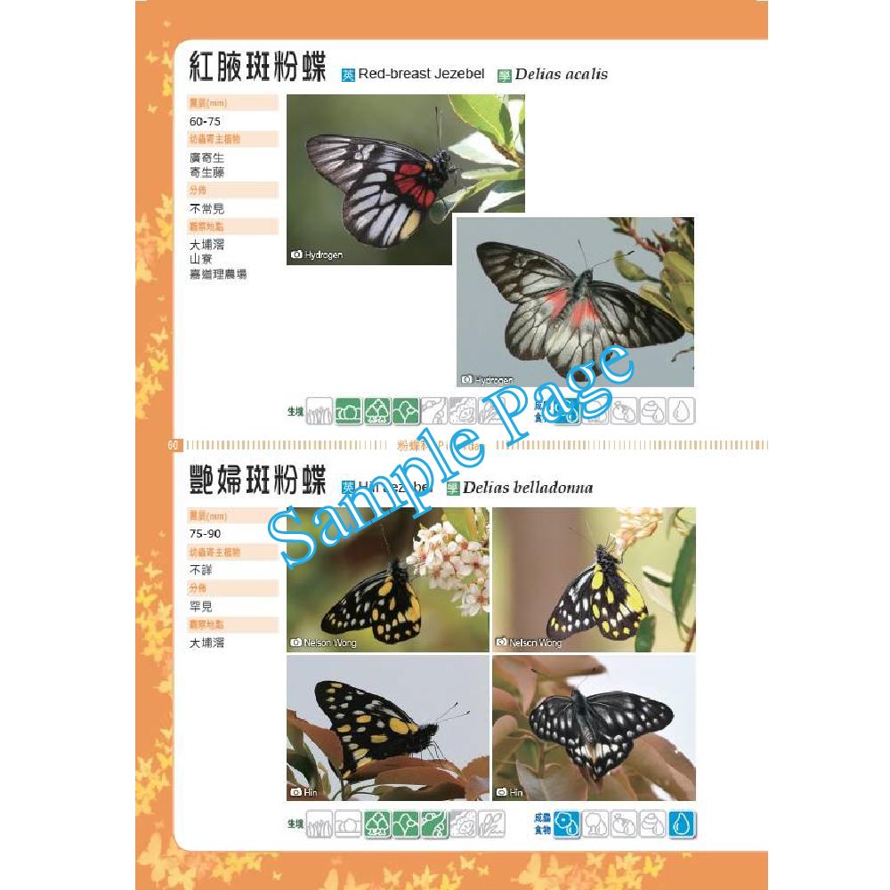 香港觀蝶手冊 - 進階篇