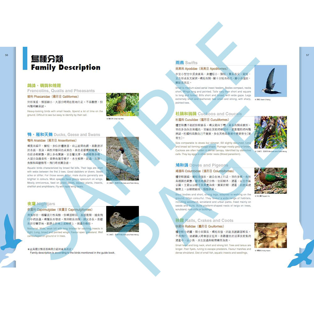 觀鳥系列01:香港觀鳥全圖鑑