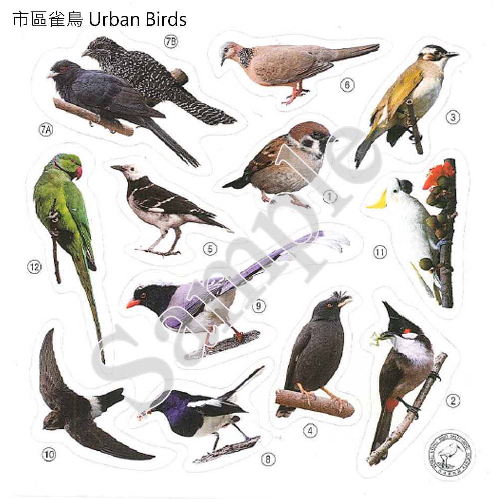 香港雀鳥貼紙 Birds of HK Stickers (一套5張 Set of 5)
